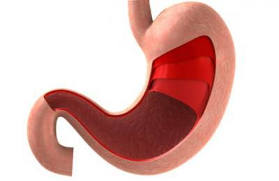 Illustration of human stomach